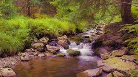 A stream in Krkonoše Stock Image
