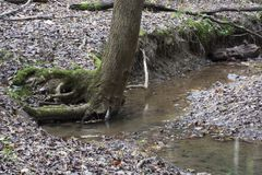 Stream with large tree, Ash Cave, Ohio stock photo