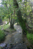Stream in leafy green forest Stock Images