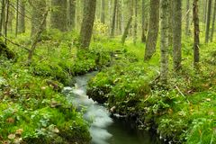 Stream in lush green forest Stock Images