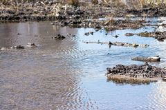 Stream in the marshland Royalty Free Stock Photography