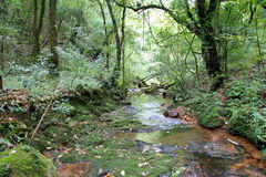 Stream in Mawphlang sacred forest Royalty Free Stock Images