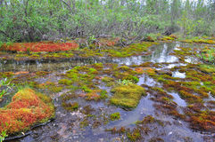 Stream and moss on hummocks. Stock Photos