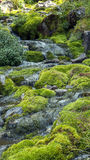 Stream and moss. Image of part of mountain river Stock Photo