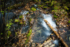 The stream of moss Royalty Free Stock Photos
