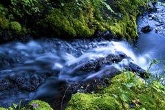 Stream and Mossy Stones Stock Photos