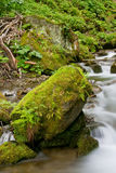 Stream in a mountain forest Stock Photography