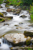 Stream in a mountain forest Stock Image