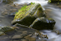Stream in a mountain forest Stock Photos
