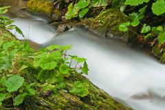 Stream in a mountain forest Royalty Free Stock Images