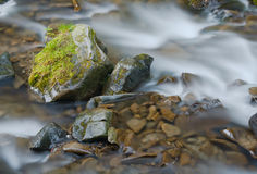 Stream in a mountain forest Royalty Free Stock Photo