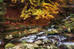 Stream in Mountain Forest Royalty Free Stock Photography