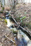 Stream in mountain forest in spring Royalty Free Stock Photography
