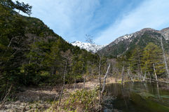 Stream mountain at Kamikochi. Stream with forest in both sides in the centre at Kamikochi Royalty Free Stock Photo