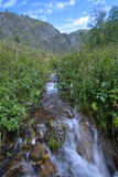 Stream in a mountain valley, Siberia, Altai Royalty Free Stock Photo
