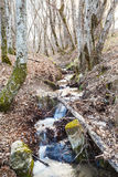 Stream in mountain woods in spring Royalty Free Stock Photo