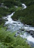 Stream in mountains Royalty Free Stock Photography