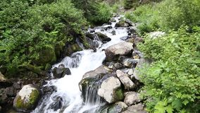 Stream in the Mountains. A freshwater stream running among thick vegetation in the Rockies stock footage