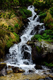Stream in the mountains in spring Royalty Free Stock Photos