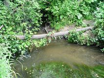 Creek with muddy water in the forest royalty free stock photo