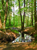 Stream in the mysterious forest Royalty Free Stock Image