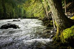 Stream at Nairn Falls, Canada Royalty Free Stock Image