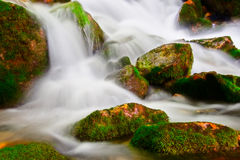 Stream in national park Mavrovo Stock Images
