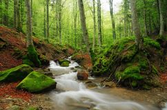 Stream in the natural park Stock Images