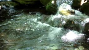 Stream in nature stock video