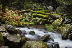 Stream in Nature Wilderness Stock Images