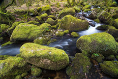 Stream in old forest, blurred water in fast motion Royalty Free Stock Image