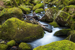 Stream in old forest, blurred water in fast motion Stock Photo