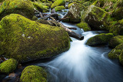 Stream in old forest, blurred water in fast motion Stock Image