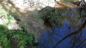 A stream out in the park stock footage