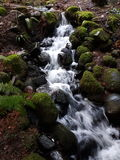 Stream over rocks. Canadian wildlife stream runs down over rocks Royalty Free Stock Photo