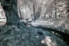 Stream in park in Poznan Royalty Free Stock Image