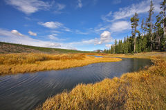 The stream in park Yellowstone Stock Photography