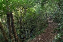 Stream and path in a lush and verdant forest Royalty Free Stock Photo