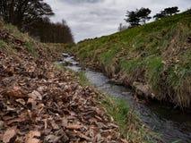 Stream in Phoenix Park, Dublin, Ireland in Autumn