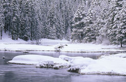 Stream and Pine Trees in Snow, Lake Tahoe, California Stock Images