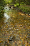 Stream, Pink Beds Area, Pisgah NF Stock Image