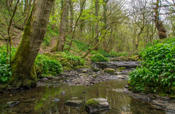 Stream in Porter's Woods. The gentle stream flowing down Porter's Woods in Northwest England near Wigan stock image