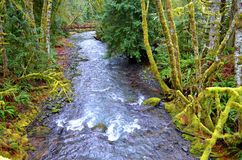 Stream through the rain forest Stock Images