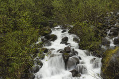 Stream in the Rain Forest. A quick flowing stream in the rain forest Royalty Free Stock Photos