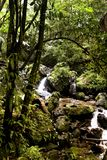 Stream in rainforest. A view of a rushing stream in the El Yunque Rain Forest, Puerto Rico Royalty Free Stock Photo