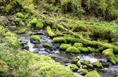 Stream through rainforest Royalty Free Stock Images