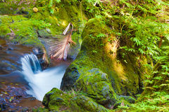 Stream in the rainforest Royalty Free Stock Images