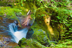 Stream in the rainforest Royalty Free Stock Image