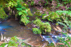 Stream in the rainforest Stock Images
