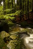 Stream. Rapid mountain brook in the woods Royalty Free Stock Photos
